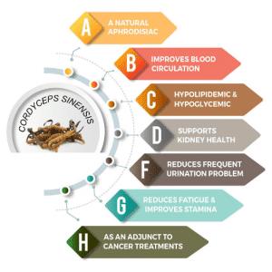 Benefici del Cordyceps sinensis