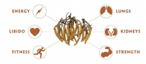 Sfera di influenza del Cordyceps sinensis