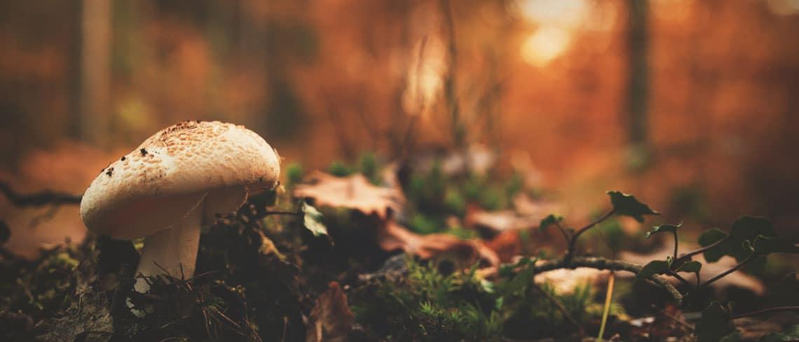 Funghi medicinali - copertina