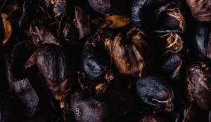 Cascara - Herbal Lax