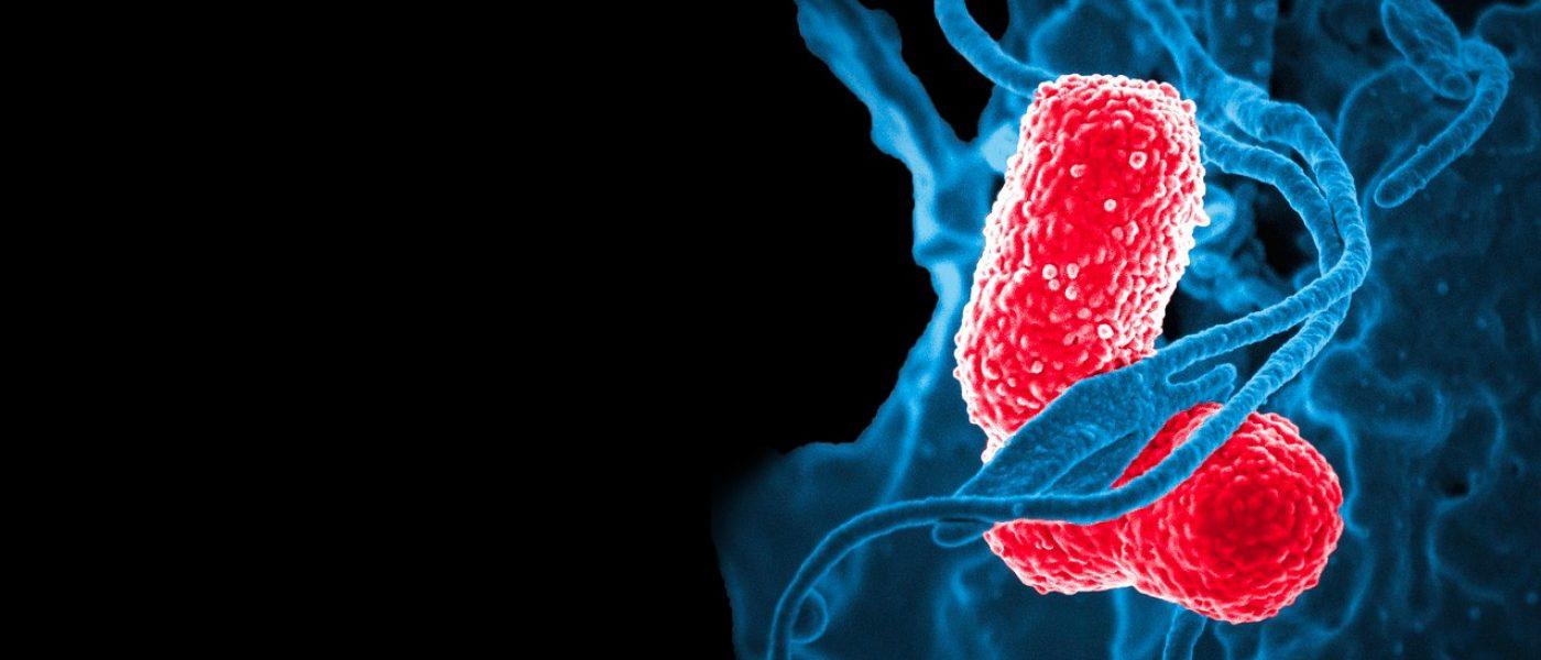 probiotici-naturali