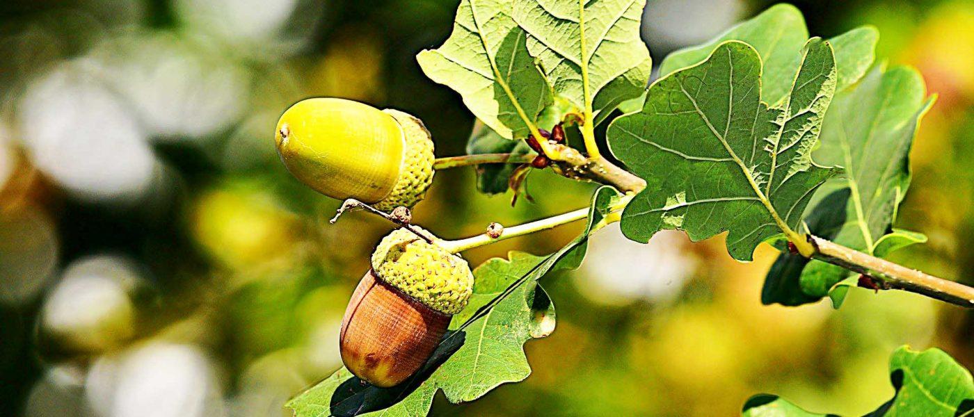 quercet curcuma